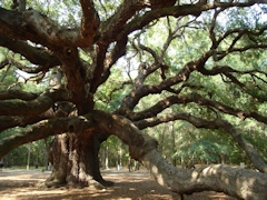 Angel_OaK_SAOT_04sm