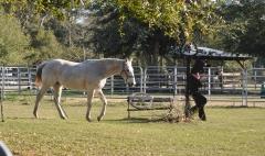 horse01_sm